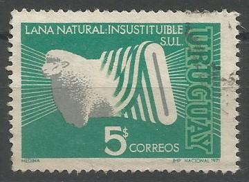 corriedale (Ovis aries)