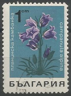 Alpen-Glockenblume