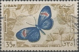 crimson-patched longwing (Heliconius cyrbia)