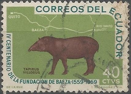 danta cordillerana (Tapirus villosus)