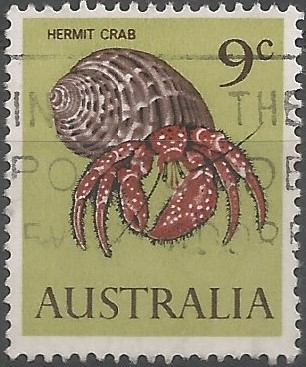 whitespotted hermit crab