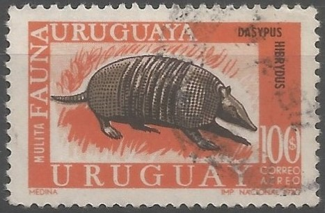 southern long-nosed armadillo