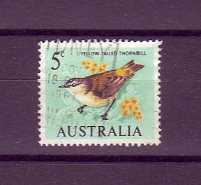 yellow-tailed thornbill