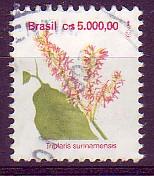 Triplaris surinamensis