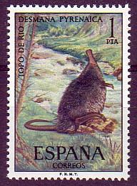 topo de río (Desmana pyrenaica)